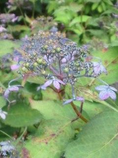 小さな 花 の 集まり
